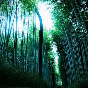 秋の京都・第二幕[1]:京都、再び