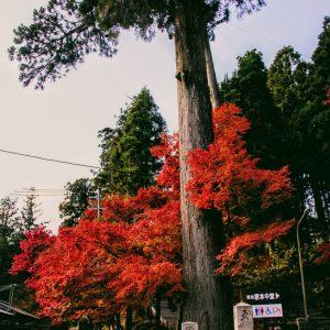 秋の京都・第二幕[7]:追い求めやってきた比叡山延暦寺!