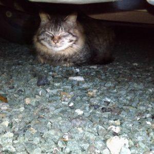 車の下でまったり~のクロ君~:18.01.09