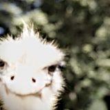 ダチョウ王国石岡ファーム | 茨城旅散策