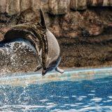 名古屋港水族館|名古屋・イルミネーションツアー2018