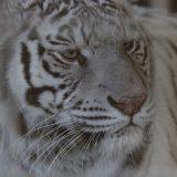 しろとり動物園|旅する平成最後の年末年始!