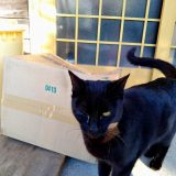 目を治療中の猫のマック~2日目