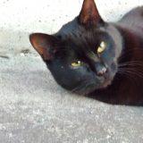 目を治療中の猫のマック~4日目