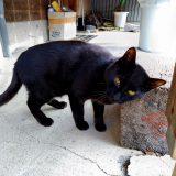 目を治療中の猫のマック~6日目