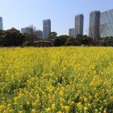 浜離宮恩賜庭園|東京桜ツアー2019