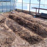 追加でジャガイモ植えるため耕す~|畑復活への道~