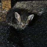 発見!子猫2匹登場!