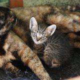 2匹の子猫は推定・生後2~3週間?:19.05.30