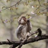 野生の猿に遭遇!|令和に続く旅[長野編]