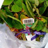 サツマイモ・紅アズマを植える!|農作物への挑戦!