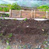 「ミニひまわり ミラクルビーム」を植えてみた~|農作物への挑戦!