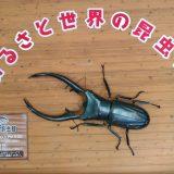 「ふるさと世界の昆虫館」にやってきました!