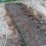 早生枝豆、再び植え付け挑戦!|農作物への挑戦!