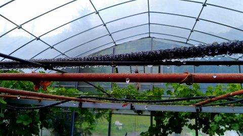 農作物に自動水やり改革!!|農作物への挑戦!