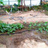 自動水やり|農作物への挑戦!