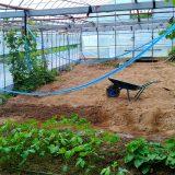 自動水やりホースチェンジと土の入れ替え~|農作物への挑戦!