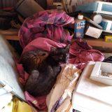 仲良く眠る兄弟子ネコのクマ・トラ😺😸:19.06.27