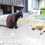 驚愕❗❗去勢されてしまった黒猫・マック!:19.07.10