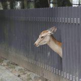 奈良公園 令和・関西道楽[奈良編]