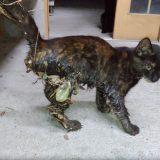 ネズミ捕りに引っ掛かった子ネコのクマ・・・