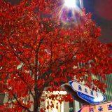 夜の「錦市場」を歩いてみた|紅の古都・京都 - Fall Foliage in Kyoto