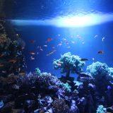 夜のサンシャイン水族館「性いっぱい展」|東京浅草旅物語2019