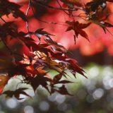 TVで紹介されていた「瑠璃光院」に行ってみたが・・・|紅の古都・京都 – Fall Foliage in Kyoto