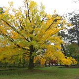 歴史と伝統の「京都御所」|紅の古都・京都 – Fall Foliage in Kyoto