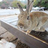 年末の大久野島、通称「ウサギ島」探検!<前編>|れいわ・しまなみの旅[広島編]