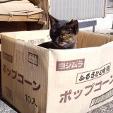 捨て猫?なクマ😺