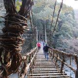 徳島の秘境「祖谷のかずら橋」❕|れいわ・しまなみの旅[徳島編]