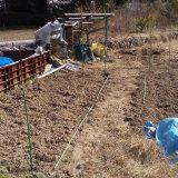 ジャガイモ、まだ芽がです。。<21日後>|畑仕事2020