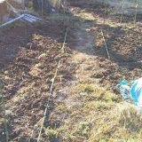 3/16 ジャガイモ、まだ芽がです。。<47日後>|畑仕事2020