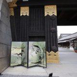 世界遺産・元離宮二条城|京都桜ツアー2020
