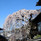 三年坂と清水寺|京都桜ツアー2020