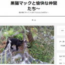 ネコさんたちは「黒猫マックと愉快な仲間たち~」で発信していきます!
