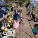 実家にジャガイモ収穫の報告~|畑仕事2020