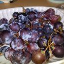 ブドウ「マスカット・ベーリーA」の収穫!