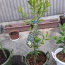育苗床に種を植え、苗木を鉢植え!