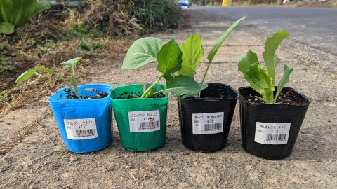 新しい野菜を畑に植えた!