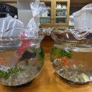 金魚と金魚鉢を購入!<その2>