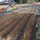 ピートモスにて土壌酸度を改良!