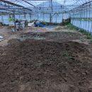 土壌改良、ビニールハウスの土と外の畑の土の入れ替え~